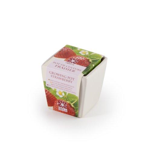 Radis et Capucine Plant de fraisier dans Un Pot en céramique