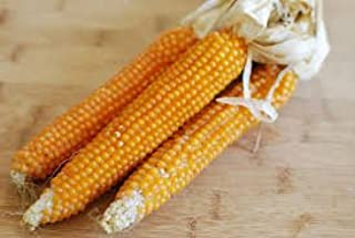 Best corn popped on the cob Reviews
