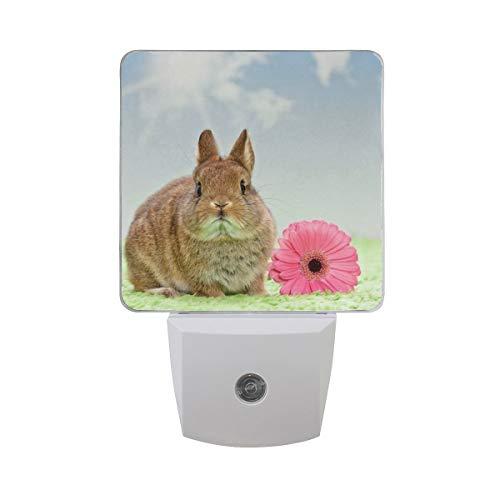 AOTISO Baby Konijn met Daisy Flower On Grass Bright Sunshine Blue Sky Auto Sensor Nachtlampje Plug in Indoor