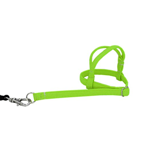 Chuanfeng 2m Vogel Geschirr Papagei Vogel Leine Einstellbare Harness Training Seil Fiber Rope Verstellbarer Leine Für Vögel Outdoor Training Und Spielen
