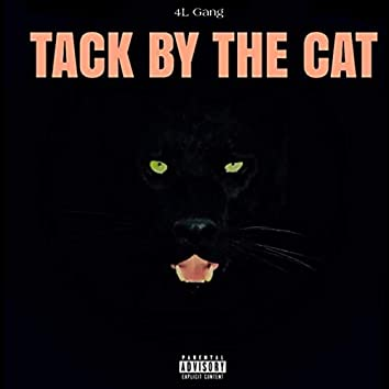 Tack by the Cat