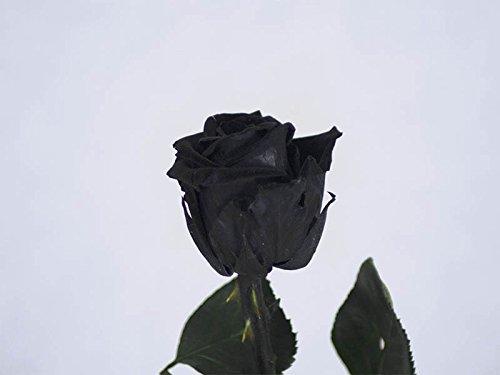 Verdissimo Rosa preservada en Estuche de Regalo Tamaño Cabeza Mini, Altura 30 cm, Negro