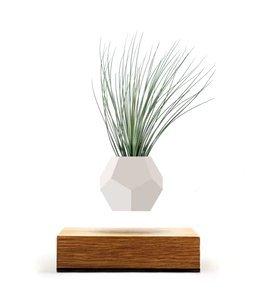FLYTE Lyfe Pot en Levitation, Bois, Blanc, 15 x 15 x 15 cm