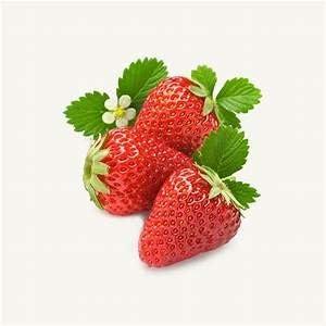 Dichondra 100 Pcs Seeds Strawberry mart El Paso Mall