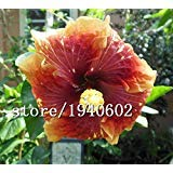 Promotion! 11 types Maidenhair Jardin d'herbes aromatiques Pot Marigold Graines de fleurs en pot Chrysanthemum Seeds 50 Pcs/Sac, 0Pvgpe