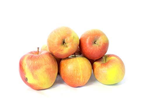 Äpfel Braeburn vom Bodensee süß-säuerlicher Apfel 1-10 KG Tafelapfel geeignet zum Backen und Kochen (8)
