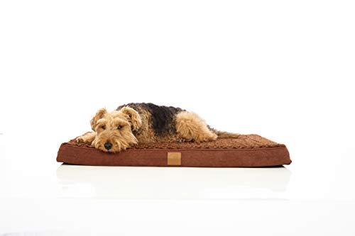 Pets&Partner Hundebett | Hundekissen | Oeko-TEX Zertifiziert | orthopädisch für mittel große und große Hunde M Braun