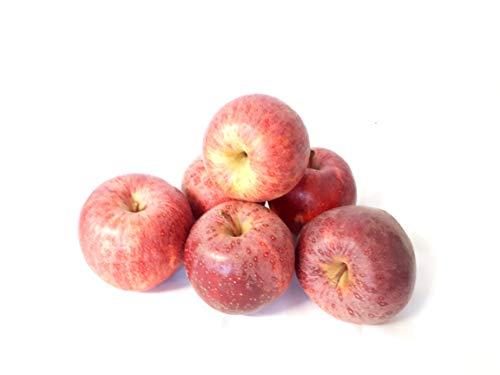 Äpfel Gala vom Bodensee süßer Apfel 1-10 KG (10)