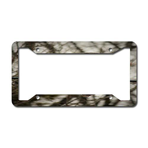 Gray Owl License Plate Frame Aluminum Metal License Plate Frame Car Tag Novelty Home Decoration for Women Girls Men Boys 6.3 X 12.2 Inch