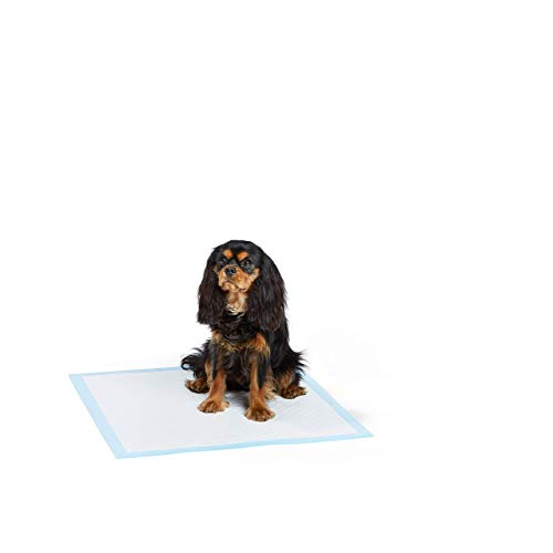 Dog House Training Pads
