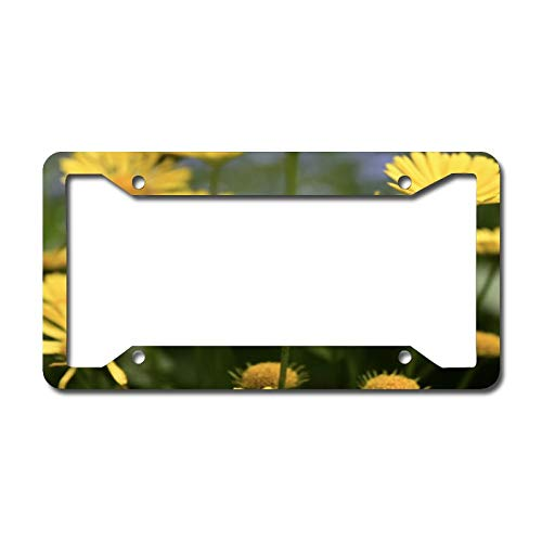 Maize Daisy License Plate Frame Aluminum Metal License Plate Frame Car Tag Novelty Home Decoration for Women Girls Men Boys 6.3 X 12.2 Inch