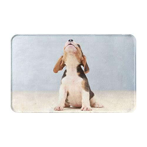 CVSANALA Antideslizante Suave Alfombra de Baño,Pequeño y Lindo Cachorro Beagle Mirando hacia Arriba,Micro Personalizado Decoración del Hogar Baño Alfombra de Piso,80 x 49 CM