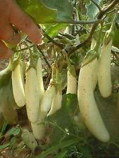 VISA STORE Gretel eed! 15 Samen! Zarte Frucht hat sßen Geschmack! Kombinierte S/H!