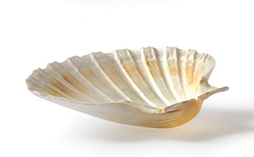 HIC Harold Import Co. Maine Man Baking Shells, 4 Inch, Set of 4, Natural Seashell