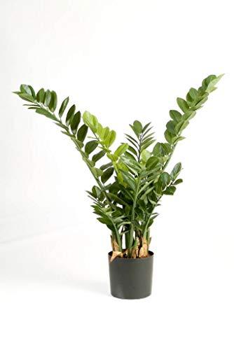 artplants.de Zamioculcas zamilifolia Artificiale AKONO, 200 Foglie, 100 cm - Pianta da Appartamento/Pianta Finta