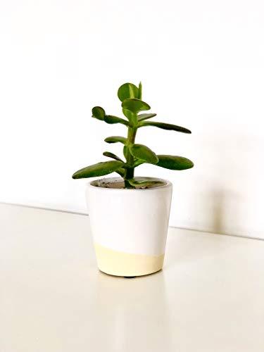 Blanc Dip Glaze Mini pot de fleurs