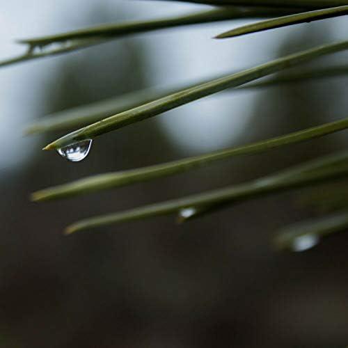 Rain Sounds, Sleep Rain & Rain Sounds & White Noise