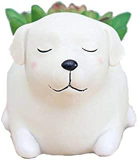 WISH HALLY WOOD Labrador Dog Succulent Planter Pots for Office House Balcony Landscape Creative Decorative Flower Pots (Labrador Dog)