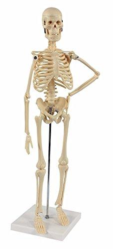 Cranstein-wissenschaftliches kleines Mini-Skelettmodell, 20