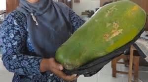 10pcs/sac multi-couleurs rares de papaye Graines rares Juicy Fruit savoureux Plante en pot pour le jardin Balcon Bonsai Planta Livraison gratuite