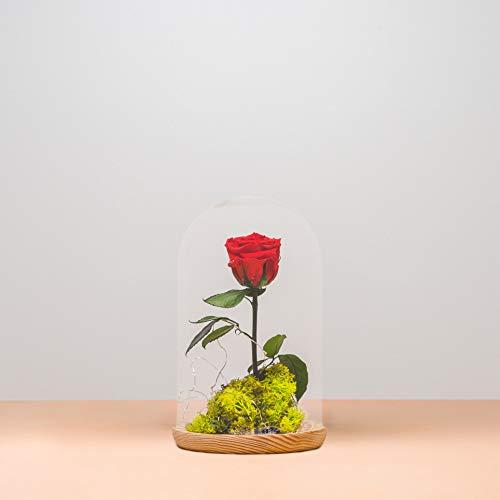 Rosa eterna - Rosa preservada en cúpula de la Bella y la Bestia - Rosa natural liofilizada - Envío de ramos de flores naturales a domicilio 24H GRATIS - Tarjeta dedicatoria incluida de regalo.