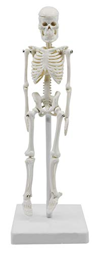 """Miniature Human Skeleton Model, 8"""" Tall - with Mount & Stand - Anatomical Model, Articulated, Flexible Joints - Eisco Labs"""