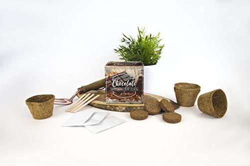 Grow your own : plante des fleurs à odeur de chocolat