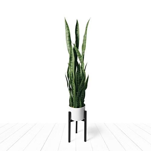 Artificial Snake Plant Fake Sansevieria Plants 38 Inch Tall 28 Faux Green Lifelike Leaves Non Toxic Pet Friendly Modern White Pot Rust Free Plant Stand For Indoor Outdoor Home Office Floor decor
