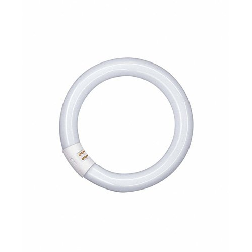 Osram - Lampada fluorescente L G10q 840 C, tubo circolare 26 mm, luce bianca fredda 32W