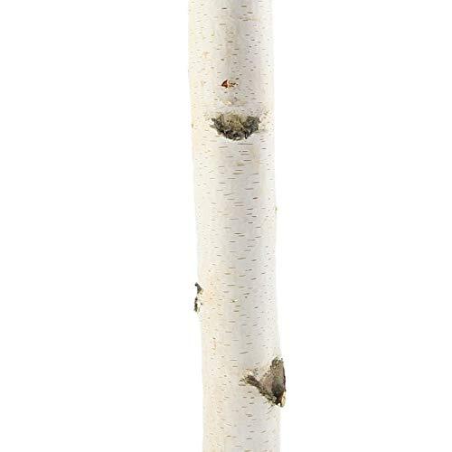 Birkenstamm 180 cm | gereinigt | Möbeltrocken | Raumteiler | Raumtrenner | Deko