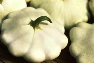David's Garden Seeds Squash Summer Scallop Early White SL1195 (White) 50 Non-GMO, Heirloom Seeds