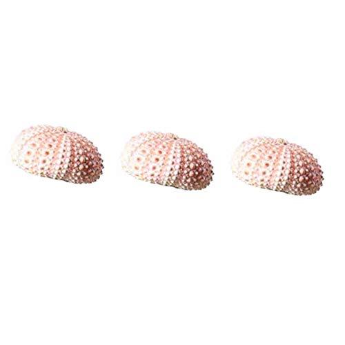 KAPAYONO 3 Piezas de Peque?Os Adornos de Conchas de Mar y Conchas de Erizo de Mar (Excepto Plantas)