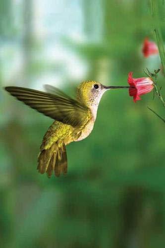 Price comparison product image Hummingbird Blank Journal (Nodin Press Blank Journals)