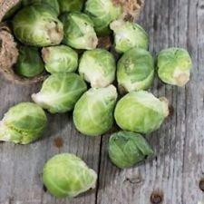 Paquet de 500 graines, choux de Bruxelles, Long Island améliorée (Brassica oleracea)
