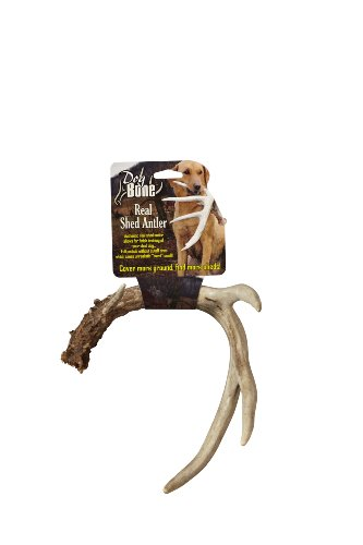 Dog Bone Real Shed Antler