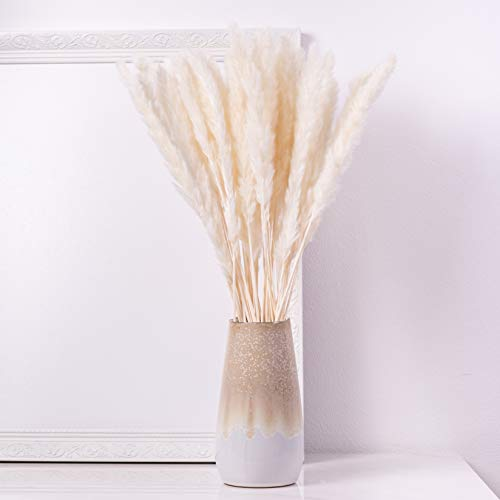 KØZY LIVING Pampasgras echt getrocknet - perfekt als Deko-Blume, Trockenblumen - klein, ca. 55 cm Länge - weiß, 30 STK im Set