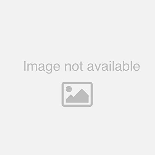 『レオナルド・デ』の1枚目の画像