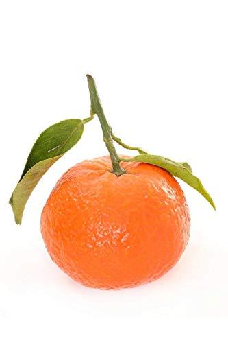 FERRY Bio-Saatgut Nicht nur Pflanzen: Mandarin Clementine, Semi, 100 Seeds Glon, (State Einschränkungen)