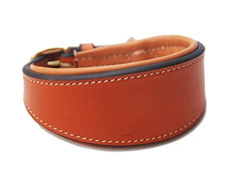 Pear - Tannery Collar de perro acolchado de piel de galgo - Londres