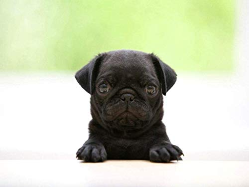 Rompecabezas de madera para adultos de 1000 piezas Funny_Doggy_Black Pug Muy desafiante para adultos y adolescentes Rompecabezas informal de gran tamaño (E42B)