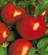 400 graines biologiques, Heirloom St. Pierre de tomate Graines De nouvelles semences pour 2017