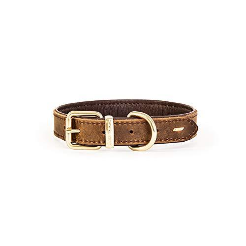 EzyDog Oxford Hundehalsband Leder- Premium Lederhalsband - Hunde Halsband für Kleine und Große Hunde, Naturleder, Verstellbares, Gepolstertes (L, Braun)