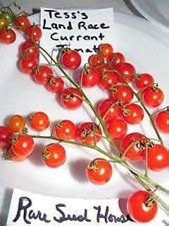 GEOPONICS Autóctona Semillas de Tomate de Tess! Peine. S/H Consulte Nuestra Tienda de Semillas Raras!