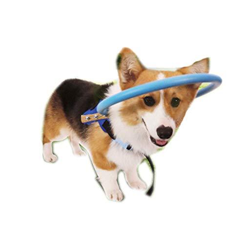 Zhuowei Arneses para Perros Mascota, Perro del Halo De Seguridad para Los Ciegos Protectora De Plástico del Chaleco Anillo Caminar Chaleco De Protección Colisión De Garras De Formación Impide,Azul