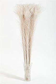 Barara King Peacock Feathers Bleached & Dyeing Feather Long Pole 30-35 inches  20 pcs per Bundle