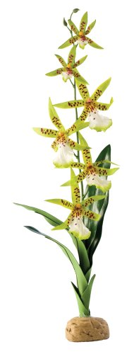 Askoll 281661 Piante terrestri Exo Terra PT2991 Ragno di Orchidee, 7, 6 x 12, 7 x 43, 2 cm