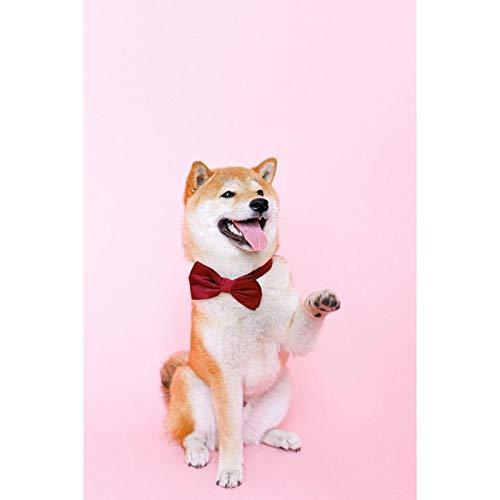 Lazodaer - Kit de pintura de diamante redondo 5D para adultos y principiantes, bordado de artes artesanales y perros posando 30 x 39,9 cm