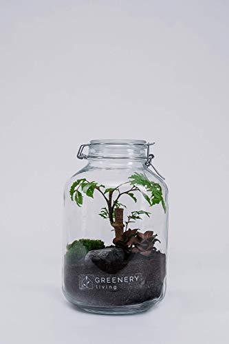 Flaschengarten Jar-1 DIY-Set/Terrarium/Biotop/Ökosystem (5 Liter): stilvolles Wohnaccessoire mit echten Pflanzen, ideal als Geschenk