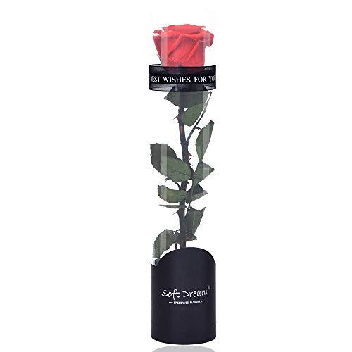 Dewanxin Rosa Eterna, Rosa Naturale Conservata, Fiore Reale, Kit di Rose, Regali per San Valentino, Compleanno, Festa della Mamma, Anniversario, Matrimonio, Casa Stanza Decorazioni (Rosso)