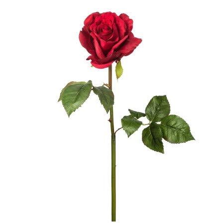 Rose rouge intense préservée, de 50 cm de long et avec une tête de 6 à 6,5 cm de diamètre